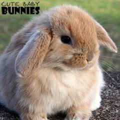CuteBabyBunnies