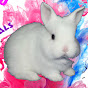 White rabbit and Funny