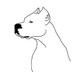 DOGO TV