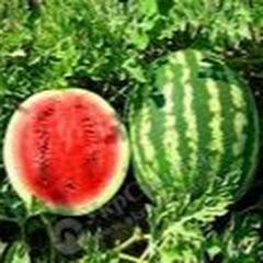 Агробизнес.Успехи в земледелии.