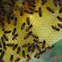 Little Bits Honey Bees