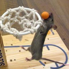 MouseAgility