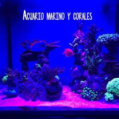 Acuario Marino y corales