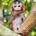 Channel of Baby Monkeys Post