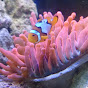 Mi marino reef