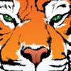 Riding Tigers Communications