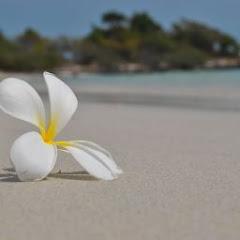 Анастасия Коробкина