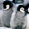 Labo Linux