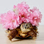 the whimsy turtle