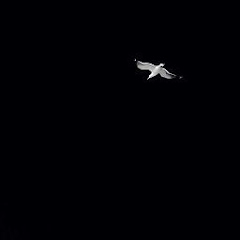 TakmaZ62