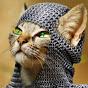 El Gato Historiador.
