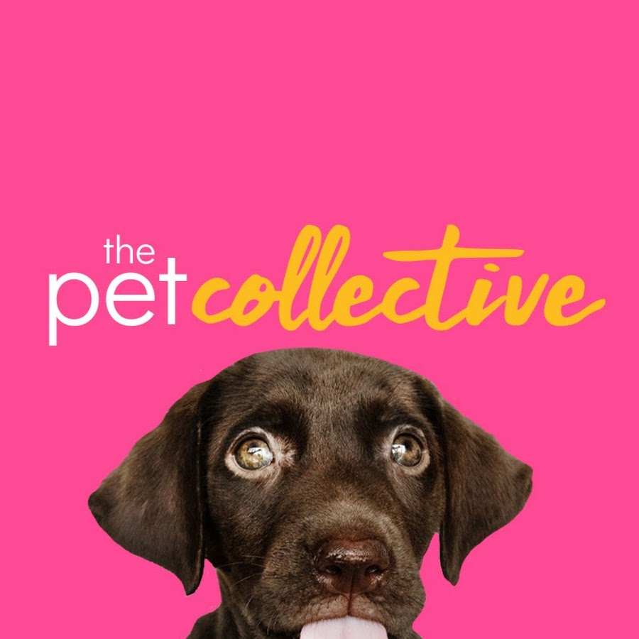 The Pet Collective Youtube