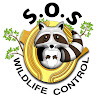 SOS Wildlife Control - Squirrel & Raccoon Removal Toronto
