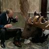 Naughty Moose