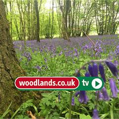 WoodlandsTV