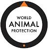 Proteção Animal Mundial