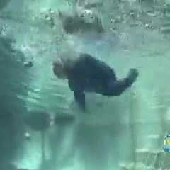 InfantSwimming