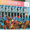 Korea Racing