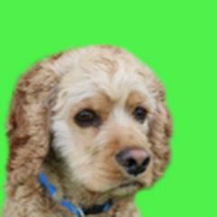 Logan The Adventure Dog