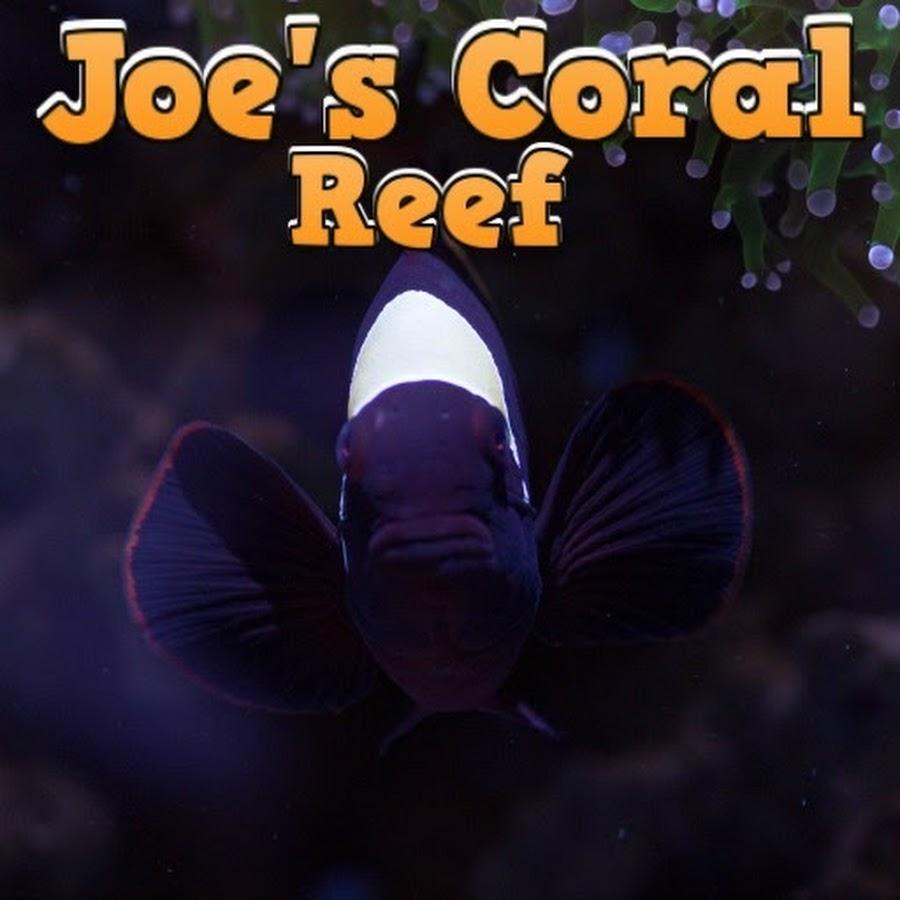Joe's Coral Reef