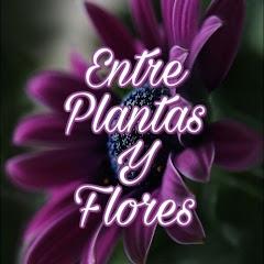 Entre Plantas Y Flores