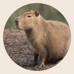 Cherry84Addict