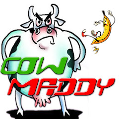 Cow Maddy