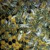 Пчеловодство -azov _pchel