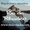 RiadeRibadeo