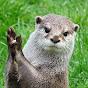 Shrill Otter