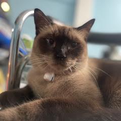 ช่างกิ๊ง GLP
