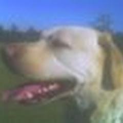 alargedog