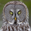 WIld Bird and Nature Videos by McElroy Productions