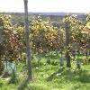 Sedlescombe Vineyard