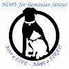 Hope for Romanian Strays