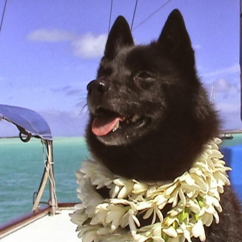 Tropical Sailing Life