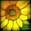 for Elysium
