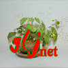 greenlifejp net