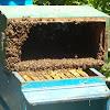 Пчелин Градина Вискяр