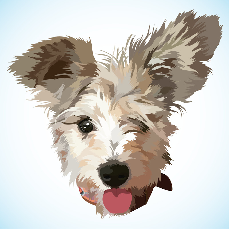 Bedlington Terrier Top 10 Interesting Facts Funnydog