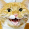 猫のいる生活 Life with Cats by FESTA
