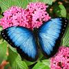 ButterflyWorldFL