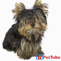 PetTube - Planet's Funniest Animals