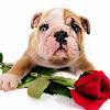 michelle puppy