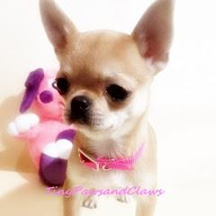Downloadduck Teddy Bear Pomeranian Puppy For Sale In Houston Texas