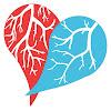 arteriasyvenas