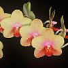 Ravenvision Orchid Supplies
