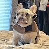 Buffalo Brazilian Jiu-Jitsu Academy