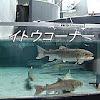 salmon6531