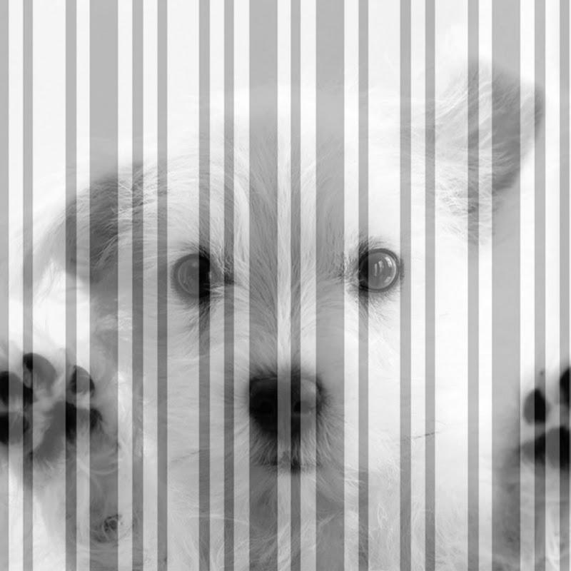 Штрих Dog